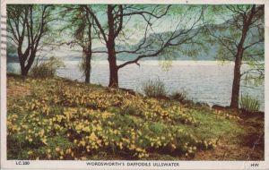 Postkarte: GroÃbritannien - Ullswater - Wordsworth Daffodils - 1963