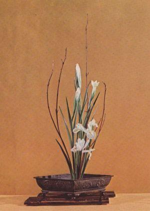 Postkarte: Ikebana Iris